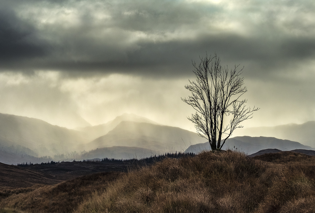 Lone tree in the Trossachs, Scotland